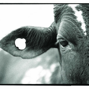 Scientists launch multi-million dollar battle against African cattlekiller
