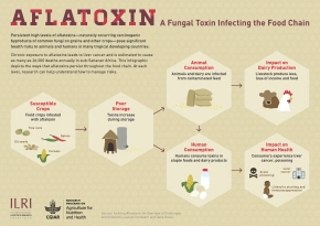 Aflatoxins in Kenya's food chain: Overview of what researchers are doing to combat the threat to public health