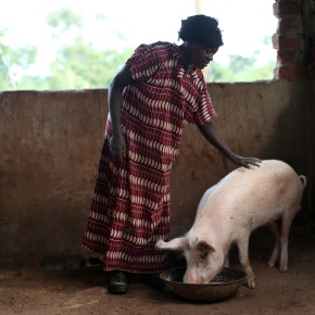 Ugandans and pork: A story that needs telling