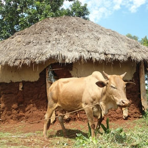 New UK funding for disease surveillance will improve health and farming in Kenya