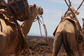 New studies on MERS coronavirus and camels in eastern Africapublished