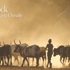 Livestock and climate change: Where the BIG opportunitieslie