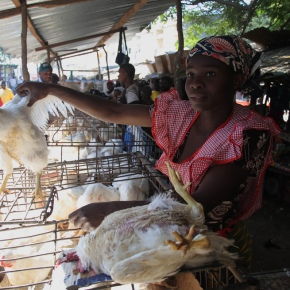 Despite contamination concerns, Africa must embrace 'wet markets' as key to food security
