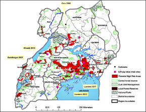 New study recommends continued research on the possible role pigs could play in transmitting Ebola inUganda