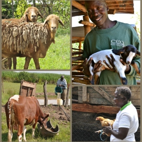 Climate-smart livestock farming in developing countries is boosted by a £10-million research award
