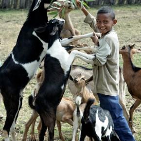 Fragments d'ILRI: Le plan directeur pour l'élevage en Ethiopie devrait aider 2.36 millions de ménages à sortir de lapauvreté