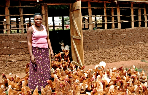 UgandanChickenFarmer_Cropped
