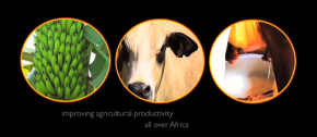 Celebrating 15 years of African agricultural biosciences excellence