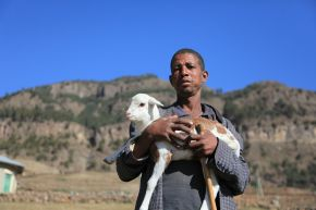 Unlocking the potential of Ethiopia's livestock sector: growth, jobs and environmental sustainability