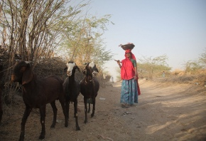 Harnessing livestock for the Sustainable DevelopmentGoals