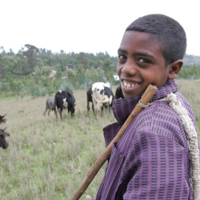 Florida and ILRI start consultations on new 'Feed the Future Innovation Lab for LivestockSystems'