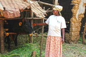 CGIAR Rwanda Climate Services for Agriculture project launches today, #WorldMetDay
