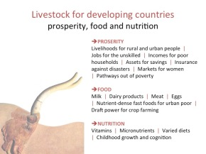 High-Level Panel of Experts on Food Security and Nutrition launches sustainable livestock developmentreport