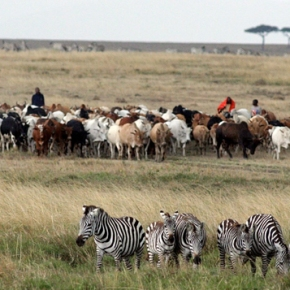 Kenya's wildlife populations are in 'widespread' and 'catastrophic' decline—New study