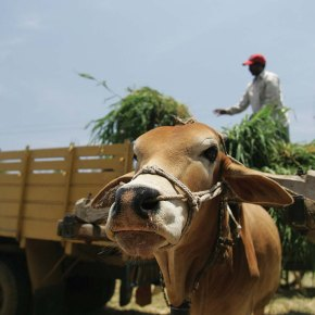 Sustainable livestock systems – highlights from ILRI's corporate report 2015–2016