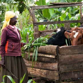 Livestock for food security and nutrition—Committee on World Food Security policyrecommendations