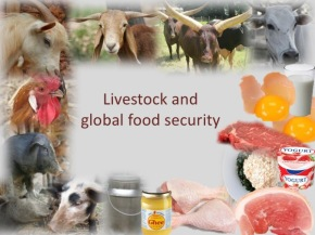 From livestock smallholders to 'smartholders': Nurturing development with animal-source foods