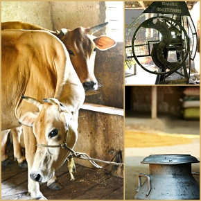 India's Odisha State and ILRI join forces to improve livestock feeding and mechanization