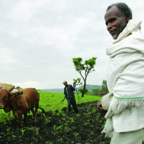 DFID/UKAid provides £4 million for genetics and health research to aid sustainable livestock production inAfrica