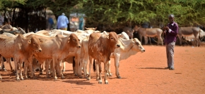 Science helps tailor livestock-related climate change mitigation strategies inAfrica