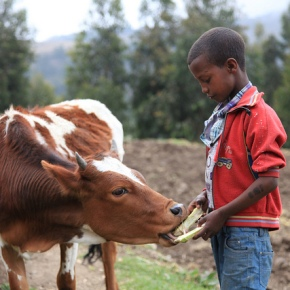 A new project is launched to support climate-smart livestock strategies and investments in East Africa