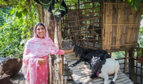 A 'Livestock Master Plan' is MISSION CRITICAL for India's state of Bihar