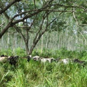 Enhancing food security through sustainable livestock systems