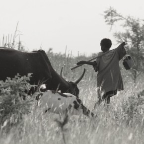 OneHealthDay is this Sunday: Join ILRI in collaborative work for healthier people, animals and lands