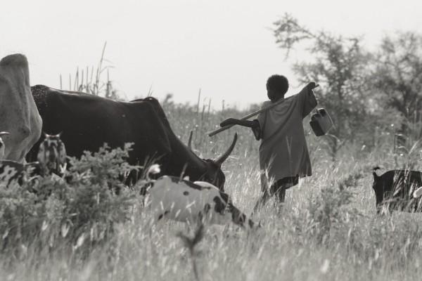Niger; Fakara;