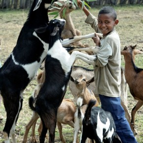 Animal health experts on the 'goat plague' known as PPR chart ways forward for better controlling a widespread disease harming the world's small-scale sheep and goats producers