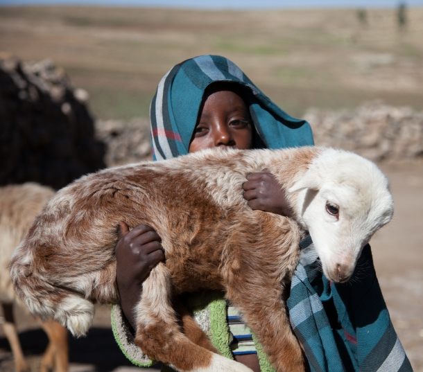 A child holds a newly born family lamb
