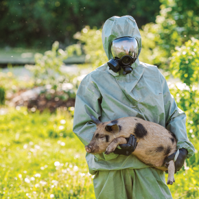 Can a vaccine save the world's pigs from African swine fever?
