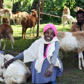 ILRI adopts new framework for scaling up livestock research for development