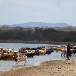 Focus on environmental health: The role of rangelands in an integrated One Health approach