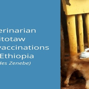 Woman veterinarian pioneers public-private partnership to improve veterinary service delivery inEthiopia