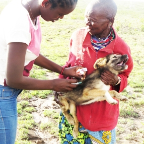 Grass roots vaccination campaigns support rabies eradication in Kenya