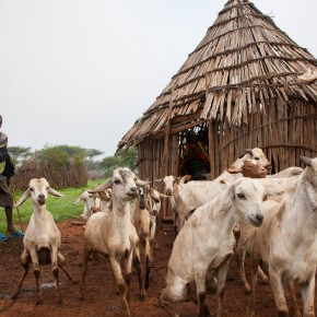 ILRI launches new drought index insurance for resilience in the Sahel and Horn of Africa project