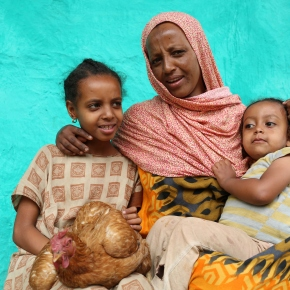 Chicken intervention in Ethiopian households improved the nutrition and growth of young children