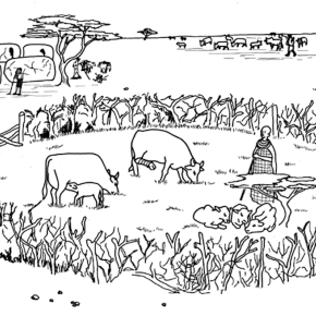 No laughing matter: Livestock enclosures in Africa are an underestimated source of the greenhouse gasN2O