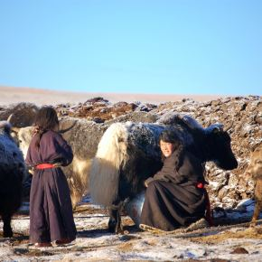 International Year of Rangelands and Pastoralists: A Mongolian proposal to the UN for 2026