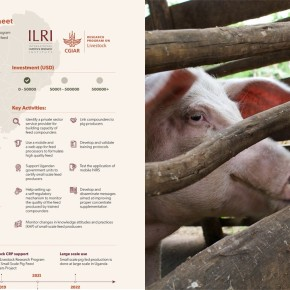 From framework to implementation: ILRI Impact at Scale program publishes first scaling readiness analysis on livestockinnovations
